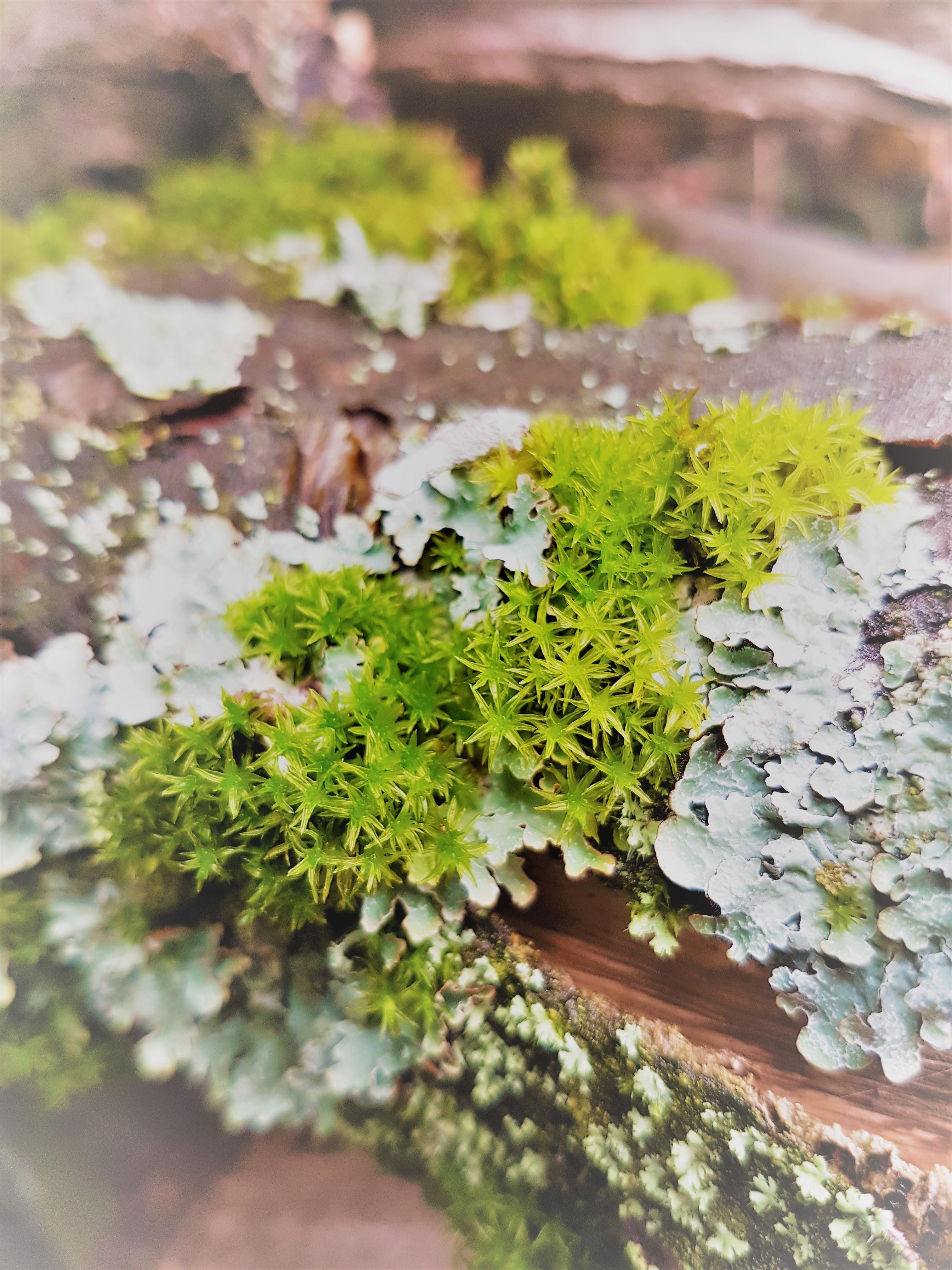 Moos und Flechten | Moss and lichen