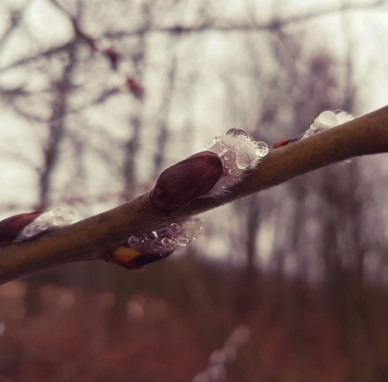 Tropfen | Drops