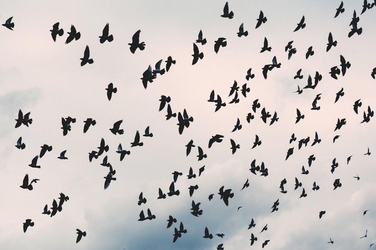 Leigh Bardugo – Das Lied der Krähen